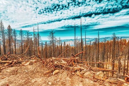 Burnt remains of trees after a fire. National American natural park-Yosemite. California. USA. Stock Photo