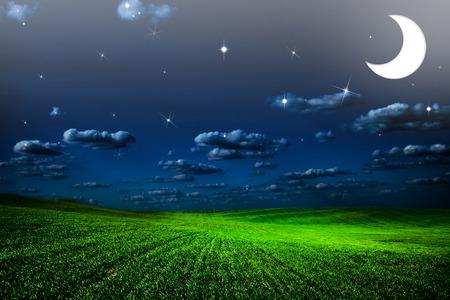 field of grass. meadow wheat under sky photo