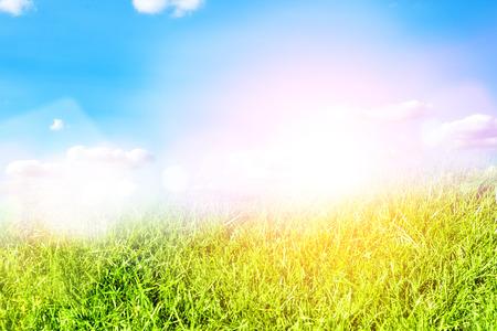 de focus: Green grass natural background Stock Photo