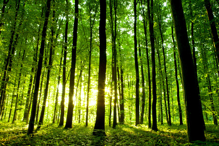 woods: beautiful green forest Stock Photo