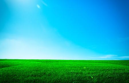 horizontal  green: Green grass under blue sky Stock Photo