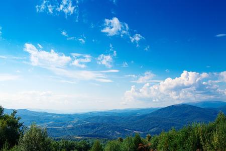 sun blue sky: Pine tree forest