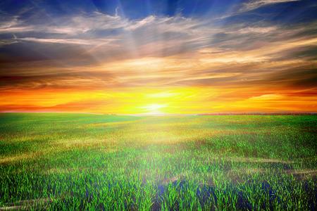 Mattina Beatiful campo verde con il blu cielo