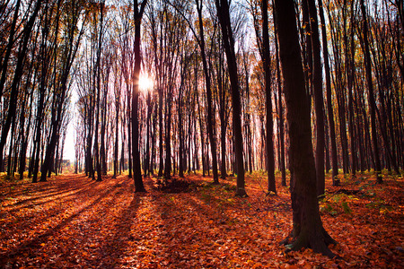 autumn forest trees. nature green wood sunlight backgrounds photo