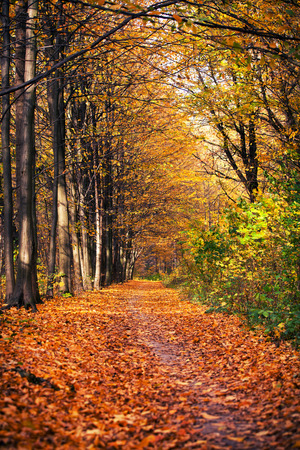 autumn forest trees photo