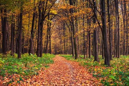 autumn forest trees photo