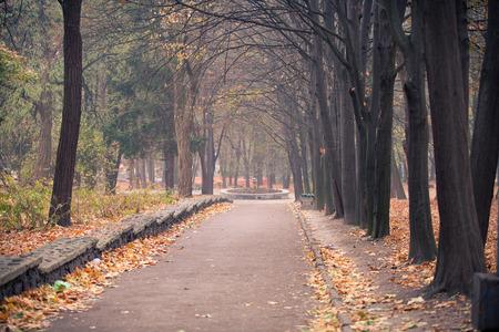 tree  oak: Oto�o en el parque