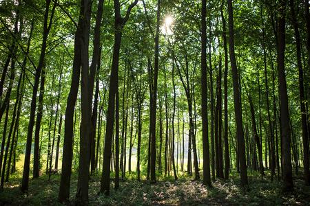 beautiful green forest 免版税图像