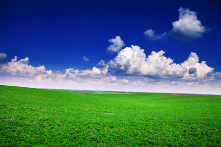 Green grass under blue sky Stock Photo