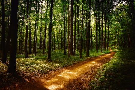 Bosque verde hermoso Foto de archivo - 37767031