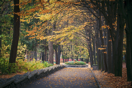 autumn forest trees. nature green wood sunlight backgrounds. photo