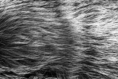 pelage: black and white animal fell texture