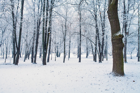 wood backgrounds: forest trees nature snow wood backgrounds