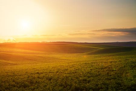 景觀: 綠色的田野和美麗的夕陽