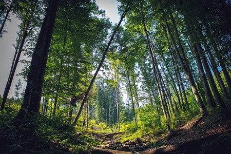 effortless: forest trees nature green wood sunlight backgrounds