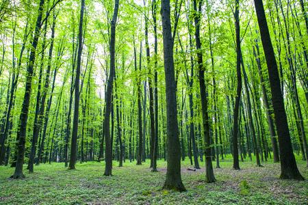 Wald Bäume Natur grünes Holz Sonnenlicht Hintergründe Standard-Bild - 45013731