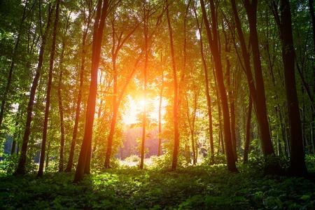 RBoles bosque cubo de madera verde luz del sol fondos Foto de archivo - 45013732