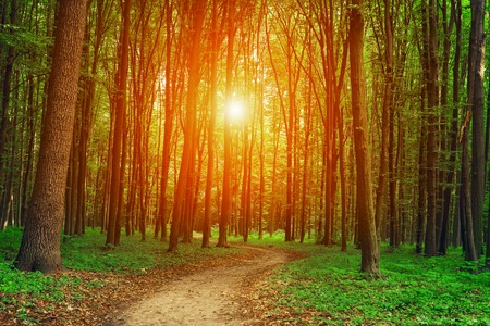 landscape nature: forest trees nature green wood sunlight backgrounds