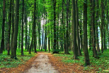 Arbres forestiers nature bois vert milieux d'ensoleillement Banque d'images - 45014048