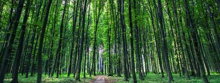 Wald Bäume Natur grünes Holz Sonnenlicht Hintergründe Standard-Bild - 45014052