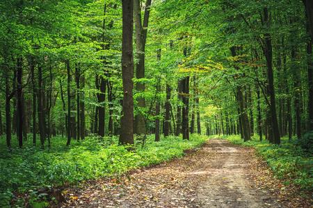 nature green: �rboles bosque cubo de madera verde luz del sol fondos