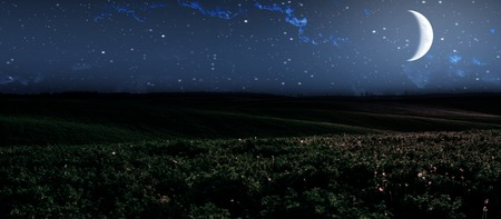 Large beautiful spring the field with a distant kind on a forest and night sky Stock Photo
