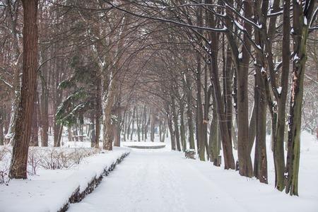 white winter: White winter in the park Stock Photo