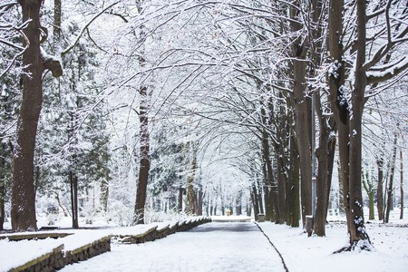 deep freeze: forest trees nature snow wood backgrounds
