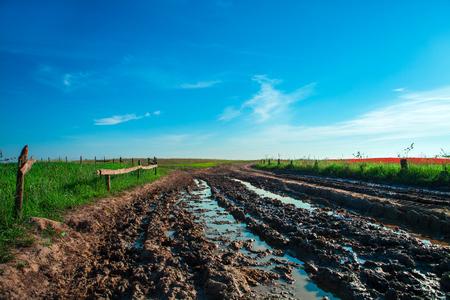 bog: bog way through the field Stock Photo