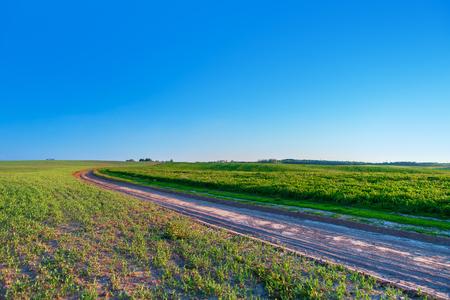 beatiful: Beatiful morning green field with blue heaven