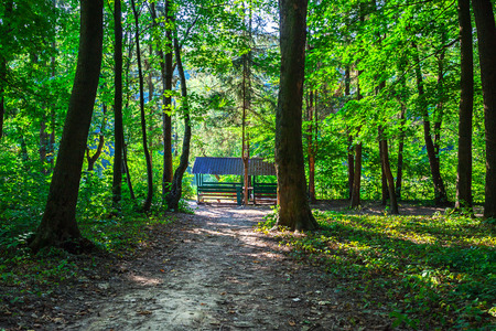 arbour in the coniferous forest in the early morning Stock Photo