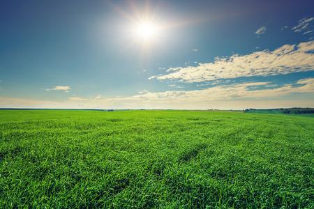 Champ vert et beau coucher de soleil Banque d'images - 72676243