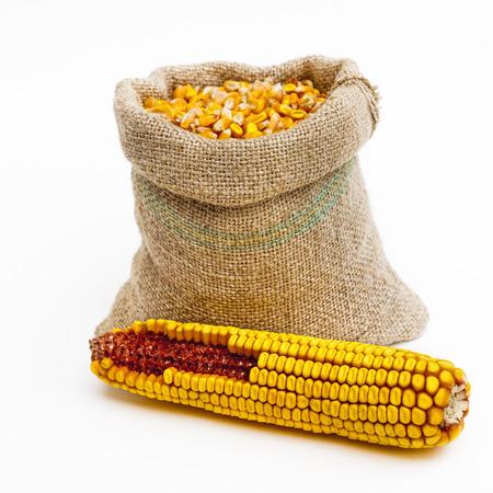 corn ear: Vista frontal de tiro de una bolsa llena de granos de ma�z con una mazorca de ma�z frente a ella. Aislado en blanco.