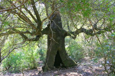 secular: Secular tree from Lord of the Ring?