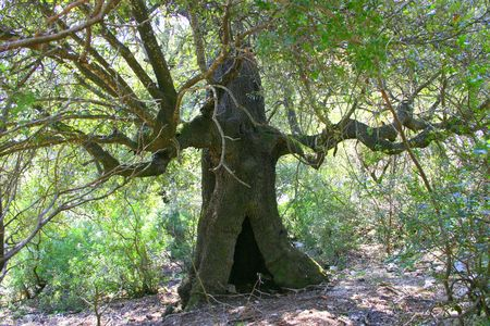 secular: Secular tree from lord of the king? Stock Photo