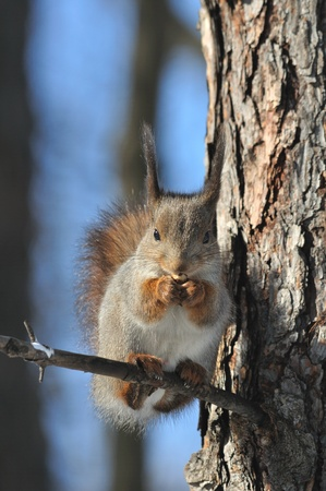 The squirrel sits on a tree. photo