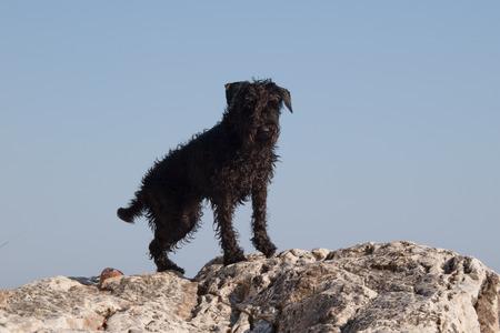 dog rock: Dog on the rock