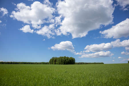 summer landscape with green field and forest, blue sky with clouds. Cheerful landscape