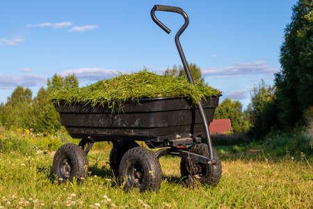 a garden cart on four wheels with cut grass. Summer, daylight Stock Photo
