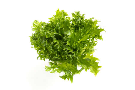 iceberg lettuce on white background. The view from the top,
