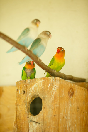 aviary: Bright exotic parrots sit on a block in cage