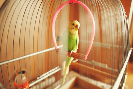 Green carrot sits in the cage