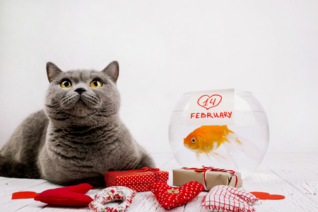 14 february: Red cloth letters LOVE lie before grey cat and aquarium with lettering 14 february