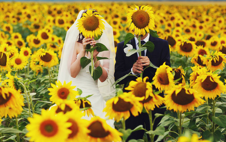 big behind: Newlyweds stand hidden behind big sunflowers Stock Photo