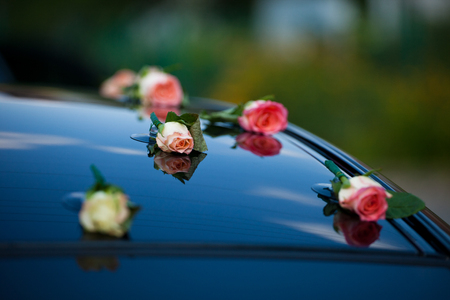 Delicate pink rose buds put on the cars hood