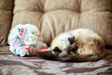 Fluffy cat sleeps before the wedding bouquet Stock Photo