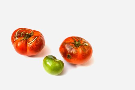 Two Rotten and a Green Tomato photo