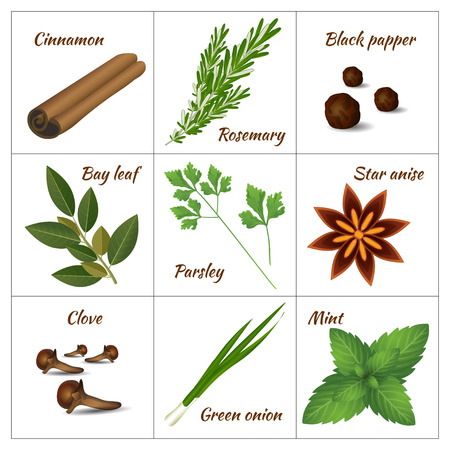 indian spices: Realistic style vector illustration. Set of different culinary herbs or medicinal, curative aromatic herbs and spices.  Fresh organic vegetarian food isolated on white background Illustration