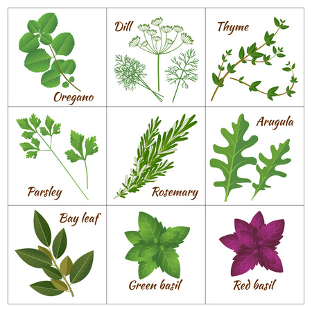 Realistic style vector illustration. Set of different culinary herbs or medicinal, curative aromatic herbs and spices.  Fresh organic vegetarian food isolated on white background  イラスト・ベクター素材