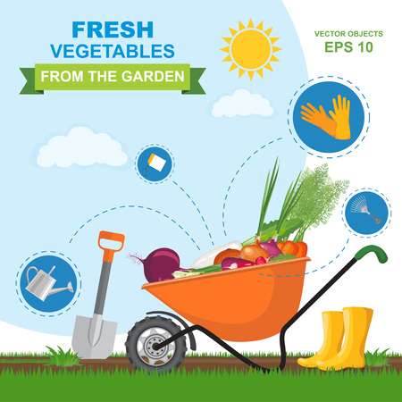 A colorful vector illustration of different fresh, ripe, delicious vegetables from the garden in orange wheelbarrow. Icon set of different kind gardening tools and equipment